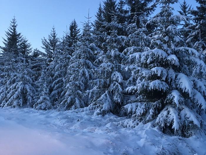 Snowy Highlands